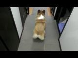 Собака танцует как Jennifer Lopez