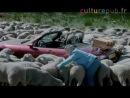 Rebaño de ovejas cabronas