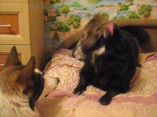 Вот так дружно мы живём.Котик ищет дом.Совершенно не боится собак.
