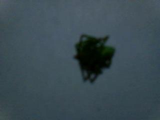 VID_20131211_201225,дети нашли зеленого паука зимой