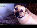 Смешные Собаки Улыбаясь Компиляция 2014
