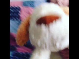 Настька Клэп,про кота и собаку