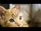 Красивые Фото fotiko.ru под музыку Dana Glover - Вальс (из мультфильма Шрек). Picrolla