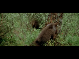 1988-L'ours (Jean-Jacques Annaud)