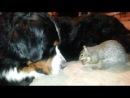 Белка прячет жёлудь в собаке (Not Vine)