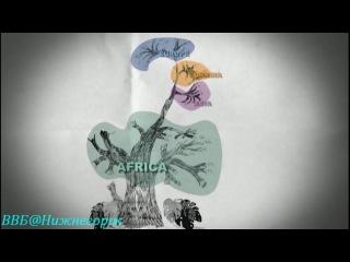 BBC «Путешествие человека (1) - За пределами Африки» (Документальный, 2009)