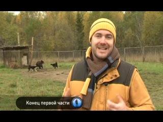 Планета собак. Русско-европейская лайка. Вологодская область