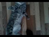 Мой кот дурак..))