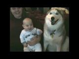 Ребенок заразительно смеется над собакой