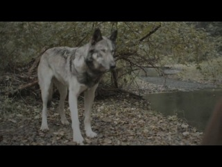 Riese Риз 1 сезон 1 серия