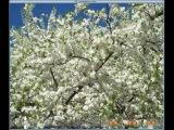Надежда Кадышева - Ой, у вышневому саду