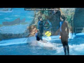 «Дельфинарий 2012» под музыку Гимн - дельфинарий Коктебель. Picrolla