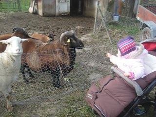 Эми кормит овечек и баранов))