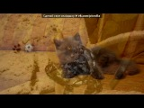 британские коты под музыку Alladin - Arabian Night (OST). Picrolla