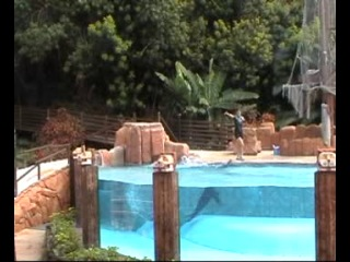 Испания. Тейде -  2014. (2-6). Парк орлов: Скоростной спуск на санях. Шоу морских львов