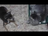 толян собачка и васенька кот