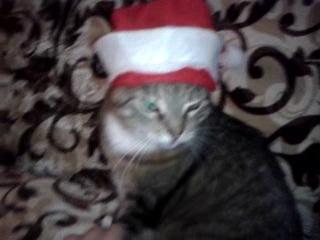Моя кошка в шапке =)
