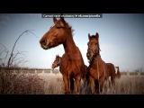 наши лошадки под музыку Валентин Стрыкало - Яхта, парус, в этом мире только мы одни..... Ялта, август и мы с тобою влюблены... . Picrolla