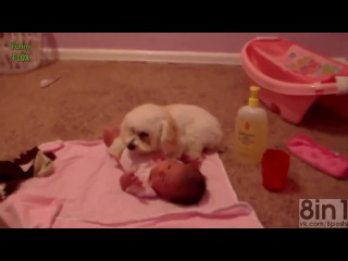 Милая Подборка - Собаки защищают детей / Cute Selection - Dogs protect the children