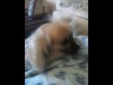счастье моей собаки когда я проснулся