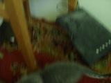 няшный котёнок ^_^