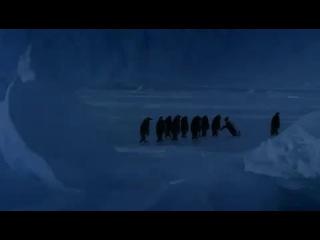 Пингвин падает❤