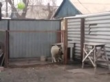 Собака классно танцует под Modern Talking