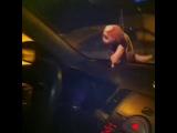 Kia Cerato vs Kia Soul (Kstovo Cars)