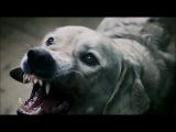Бой между человеком и собакой ( скорей всего социалка)