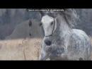 «Со стены →Типичный конник←» под музыку Coldplay - Talk. Picrolla
