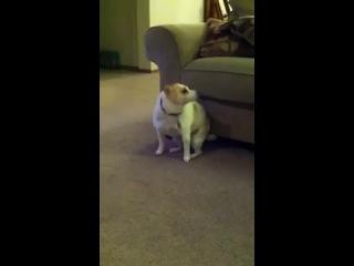Собака танцует под песню Эминема