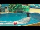 Дельфин и человек.