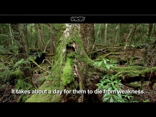Suicide Forest in Japan