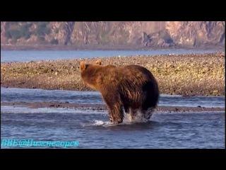 BBC «Рассказы о животных» (10 серия) (Документальный, 2008)