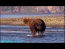 BBC Рассказы о животных 10 серия Документальный 2008