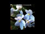 «ЦВЕТЫ ДОМА И НА ДАЧЕ» под музыку Игорь Крутой-Сколько должно быть хорошего и прекрасного в душе человека,чтобы сочинить такую музыку.Это волшебное сочетание нот& - музыка для души. Picrolla