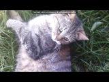 мои животные под музыку Neon Trees - Animal ( саундтрек из Симс 3 Животные) . Picrolla