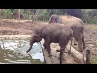 Азия: Чё по чём? Кота-Кинабалу Малайзия слоны