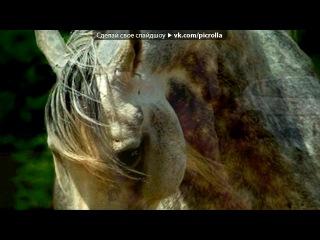 «Со стены ЛоШаДь НаШа МеЧтА» под музыку Bryan Adams - Here I Am Музыка из мульф. про лошадей. Picrolla