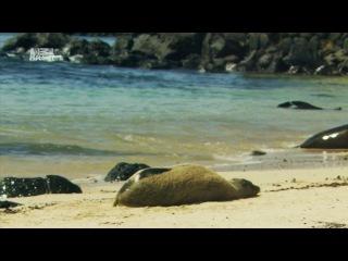 Неизведанные острова 3 Галапагосские острова / Galapagos