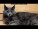 «я» под музыку Из м/ф Пёс в сапогах - Песня котов кардинала.