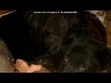 «Щенки приюта» под музыку Собачья жизнь с глазами волка - Если это есть волчья доля - Умирать в снегу от боли, Я её приму на воле!!. Picrolla