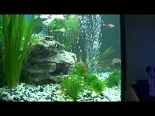 Наши рыбки(только смотрите в хорошем качестве, а так размыто всё)