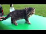 Кот, котенок, котик, мило, малыш, падение, испуг :)