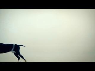 Поющие трусы- Василек(без цензуры)