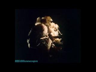 BBC «Живая планета. Портрет Земли (05) - Моря трав» (Документальный, 1984)