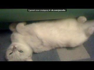 «моя кошка» под музыку Кеша♫♥ - Тик Ток ♫♥. Picrolla
