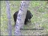 Охота с луком на медведя