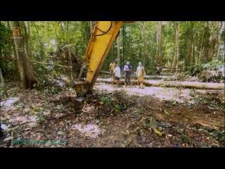 History «Бамазонка / Золотоискатели (4). Лесоповал» (Документальный, 2012)
