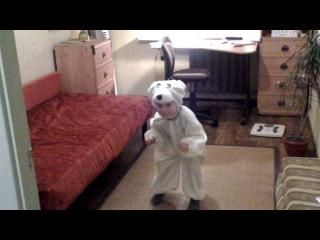 один день из жизни белого медведя
